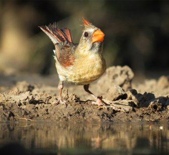 plantlife-birds