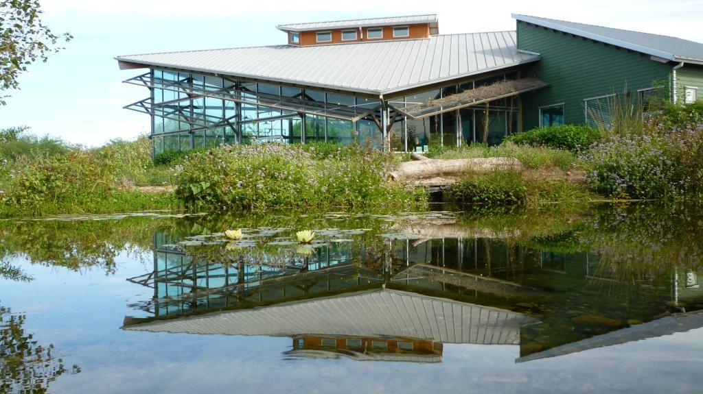 lily in pond at EWBC_docCompress