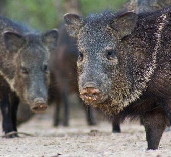 mammals-categories2